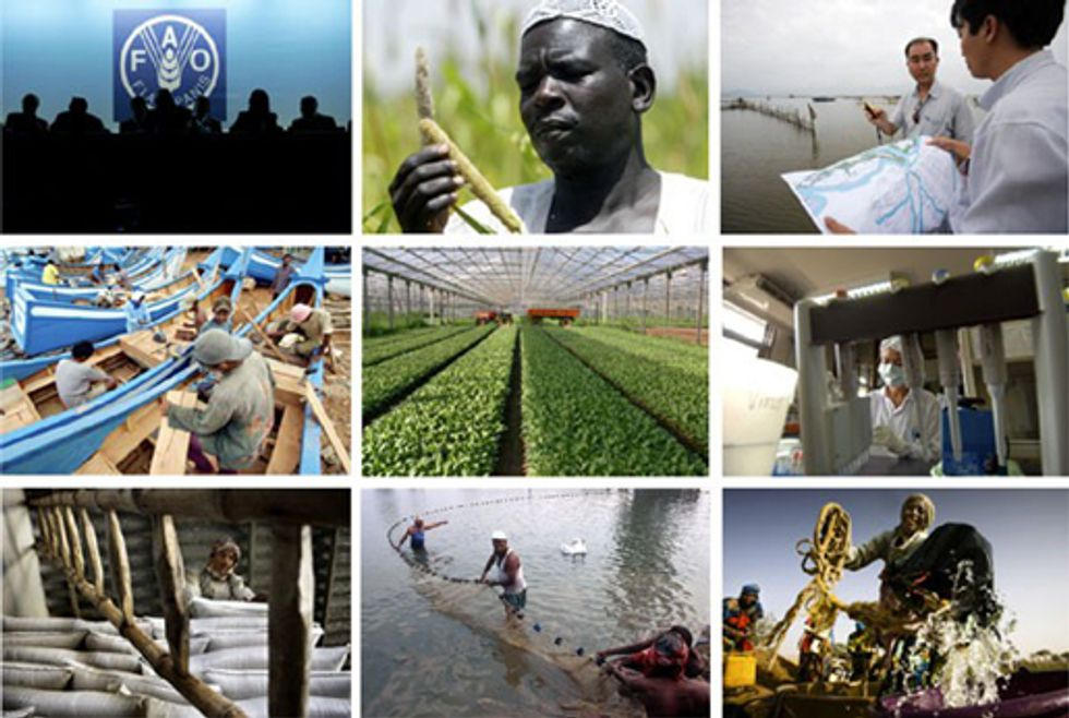 A Busy Year for the Food and Agriculture Organization