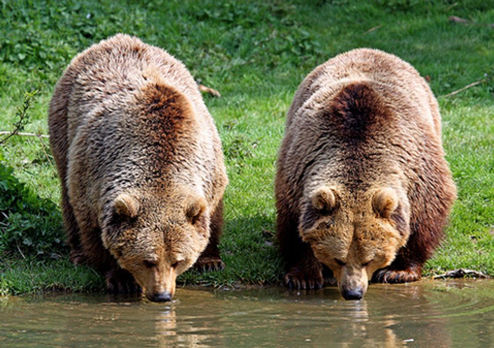 Good News for Wild Carnivores in Romania
