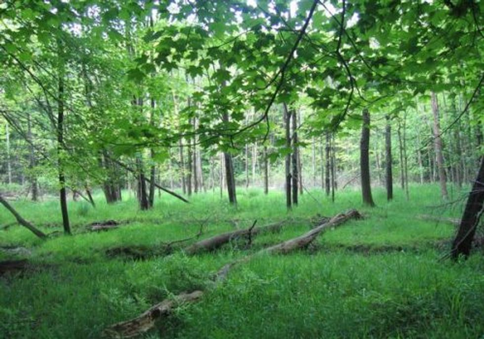 Forest Forum for Big Creek Watershed
