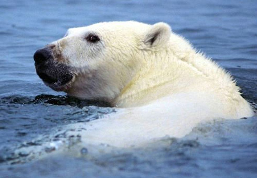 Voice Your Support to Protect America's Arctic Ocean