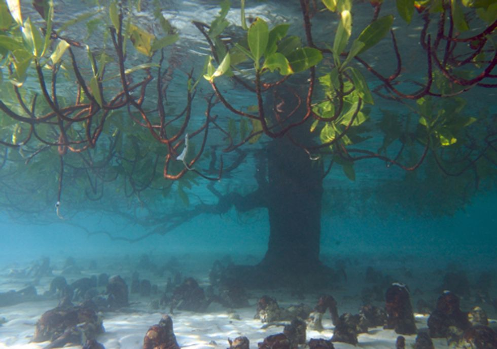 More Recognition Needed for Blue Carbon's Role in Curbing Climate Change