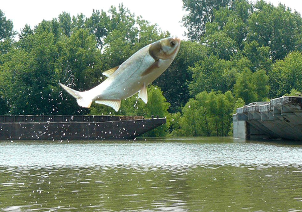 Asian Carp Invasion Can Be Stopped by Separation