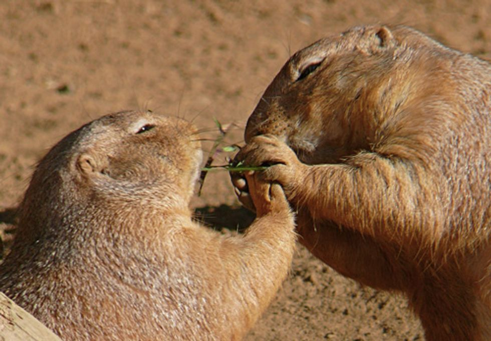 It's 'Prairie Dog Day' in the West—State and Federal Conservation Report Cards Are Out