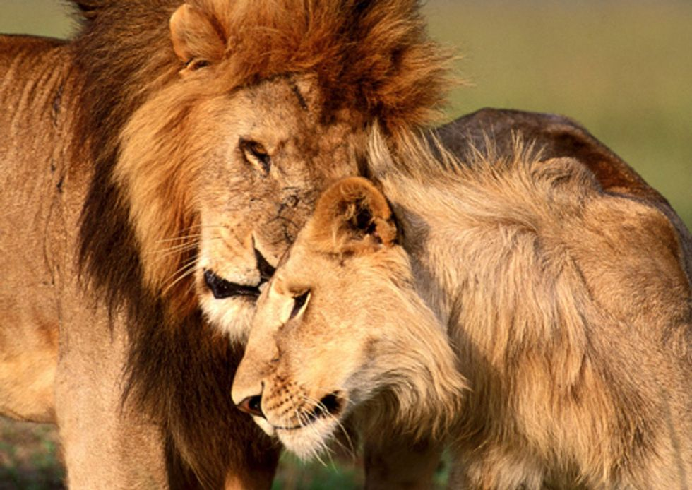 10 Most Bizarre Ways Nature Finds Love in the Wild