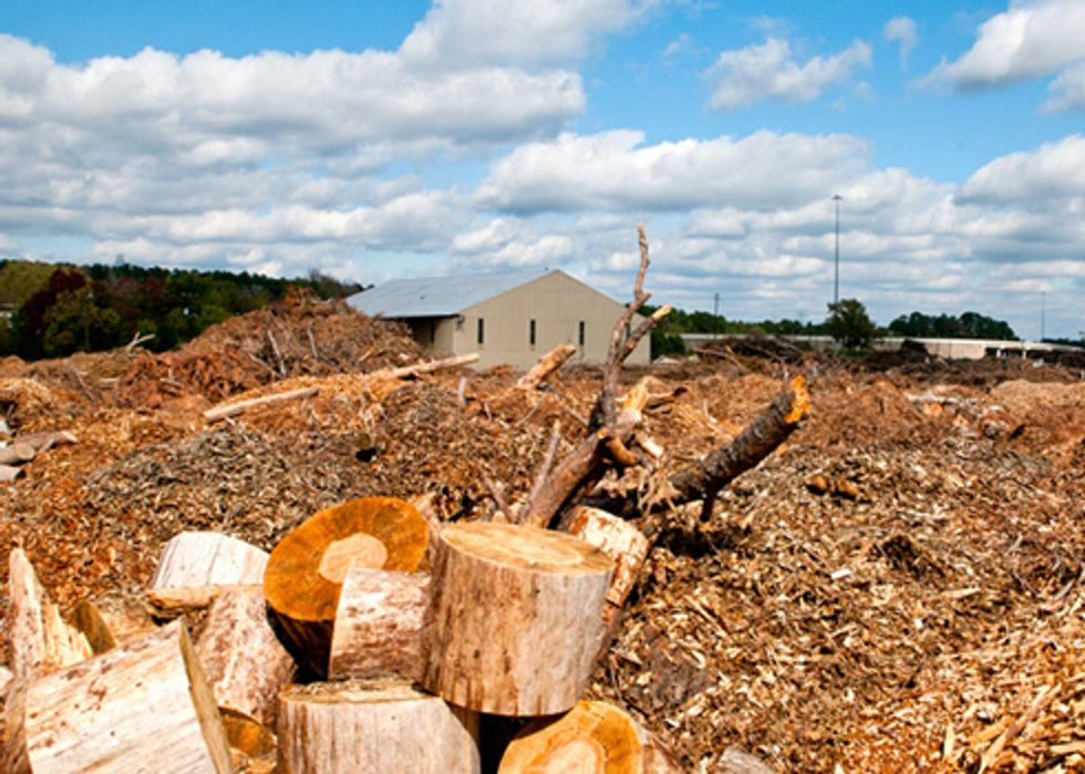 Biomass Energy May Accelerate Global Warming