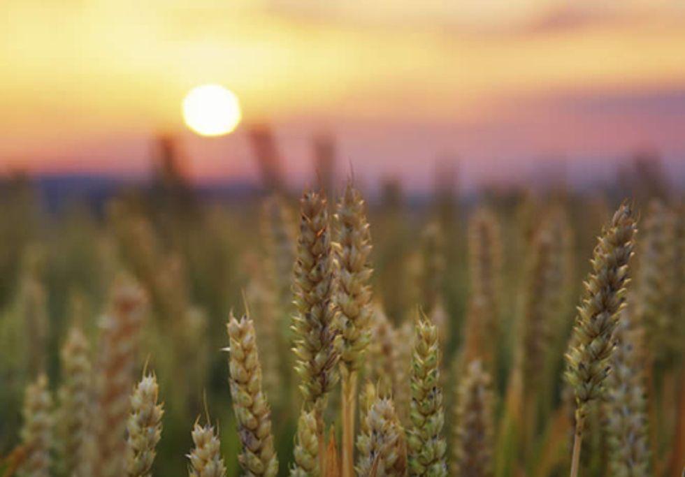 Growth-Based Global Economy Overwhelms Environmental Health