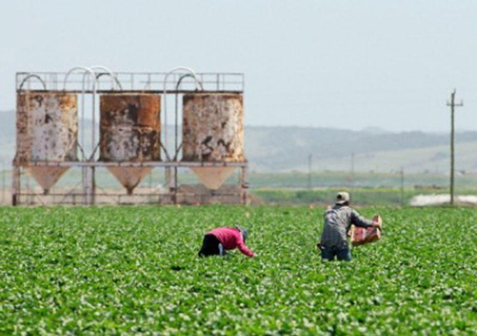 California Farm County Says No to Methyl Iodide