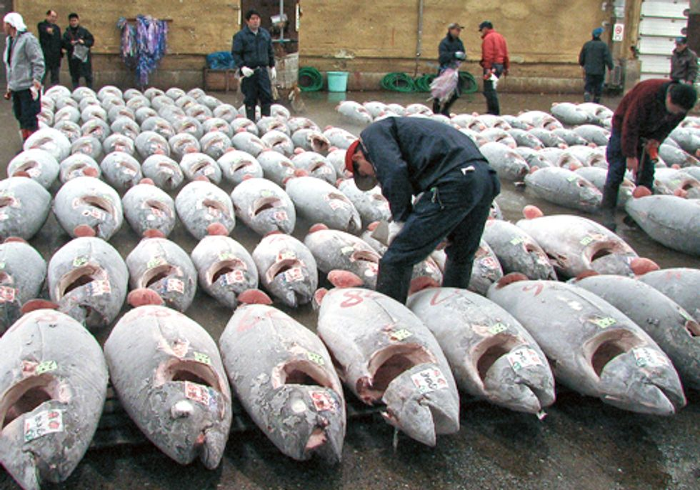 World Fisheries are in Trouble, Better Management Needed