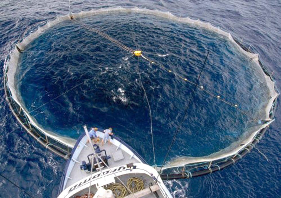 Overfishing Leaves Swaths of Mediterranean Barren