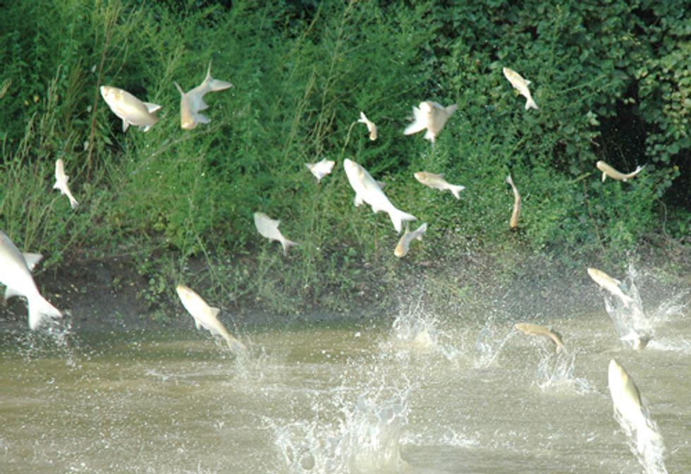EPA Official Says Feds Are Winning Asian Carp War