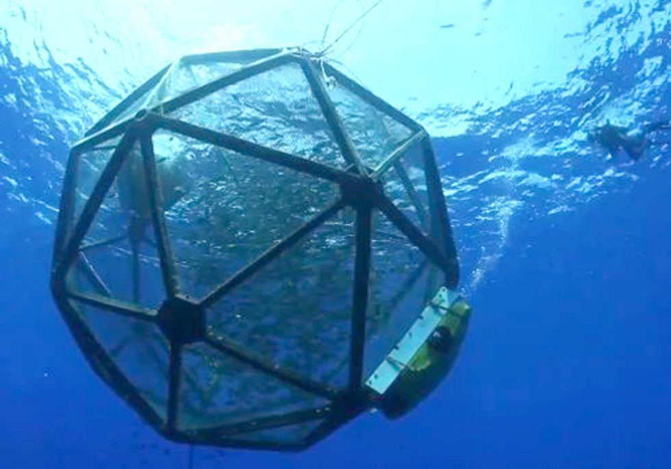 First Commercial Offshore Aquaculture Harvest in U.S. Raises Red Flags