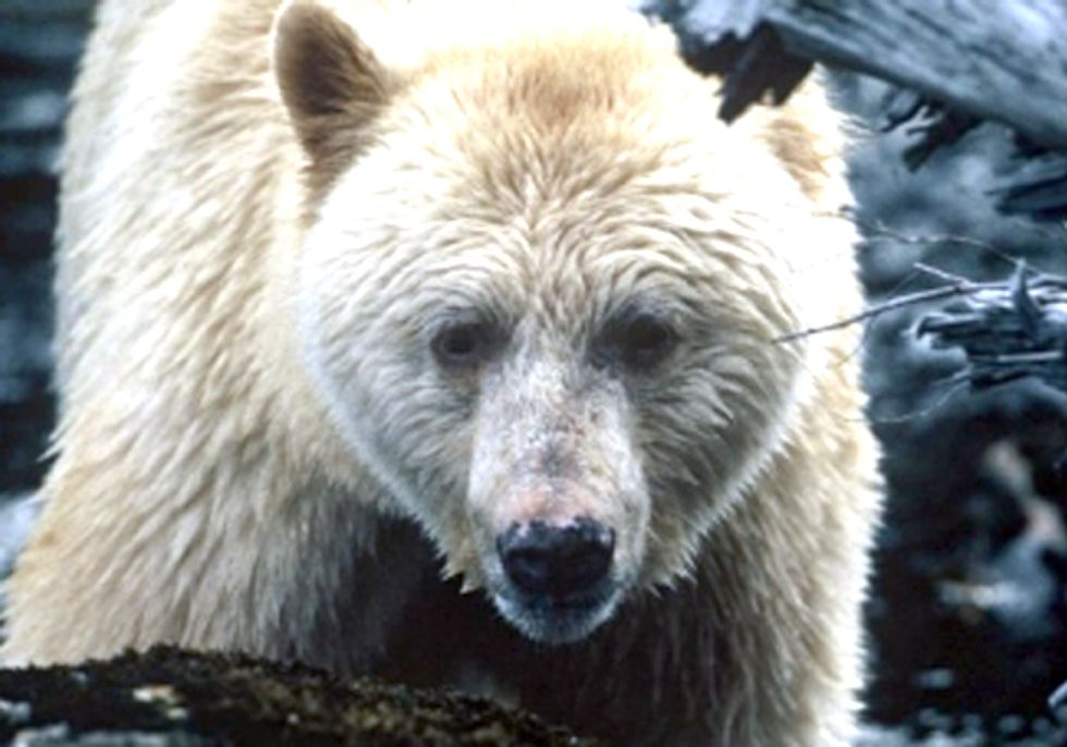 ACTION: Save British Columbia's Great Bear Rainforest from Enbridge
