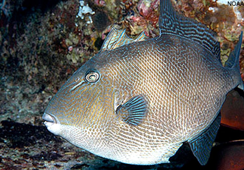 Protections Approved for Dozens of South Atlantic Fish Species