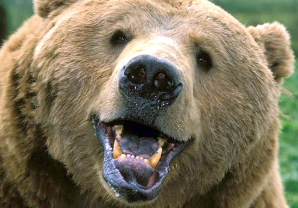 The Slow Revival of America's Grizzlies