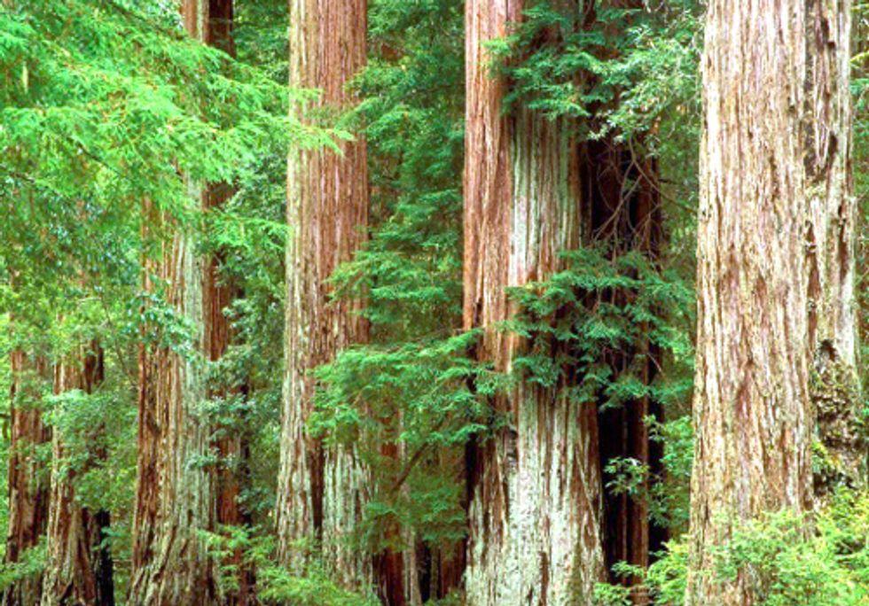 Federal Judge Puts Final Nail in Coffin of Bush-Era Logging Plan