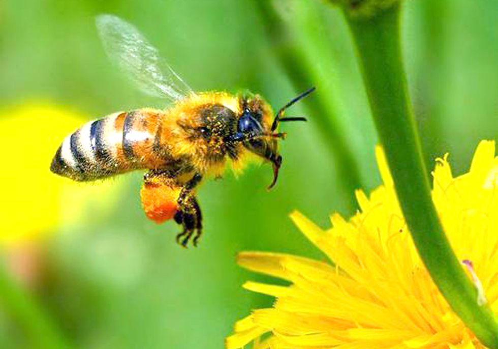 More than One Million Urge EPA to Protect Bees from 'Colony Collapse Disorder'