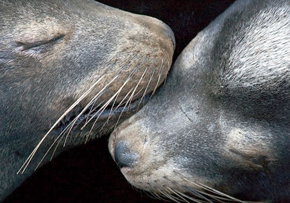 U.S. District Court Ruling Could Allow the Killing of 460 Federally Protected Sea Lions