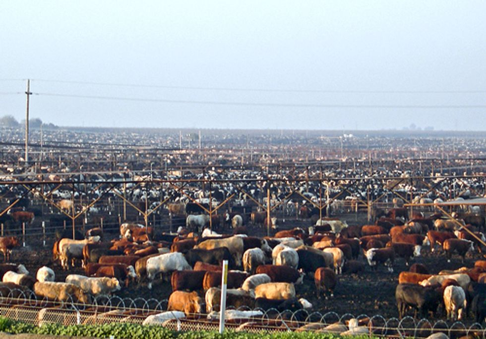 Rising Farm Animal Population Poses Environmental and Public Health Risks