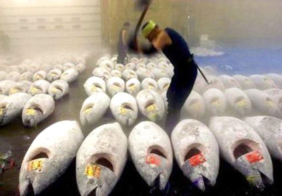 New TV Show 'Wicked Tuna' Trivializes Plight of Bluefin Tuna