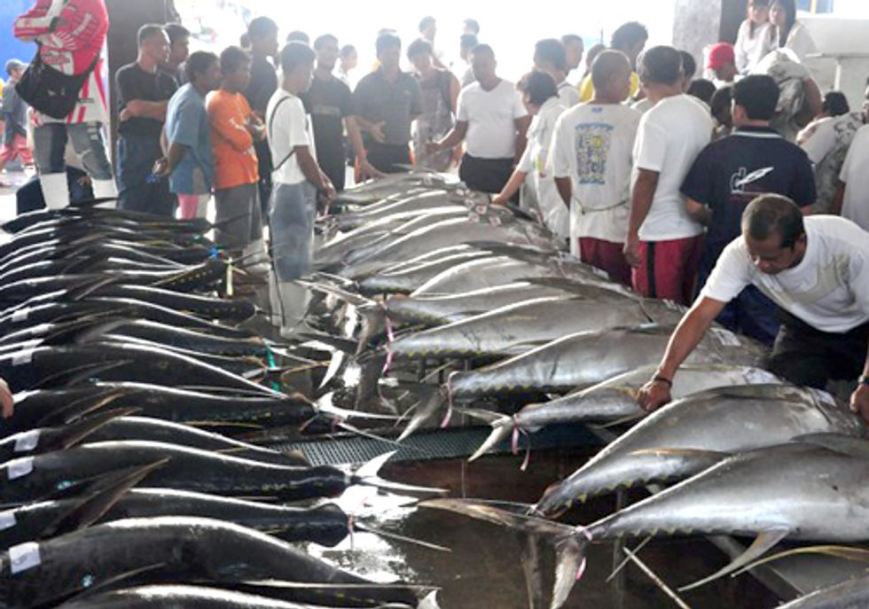 Talks at Meeting for World's Largest Tuna Fishery Collapse