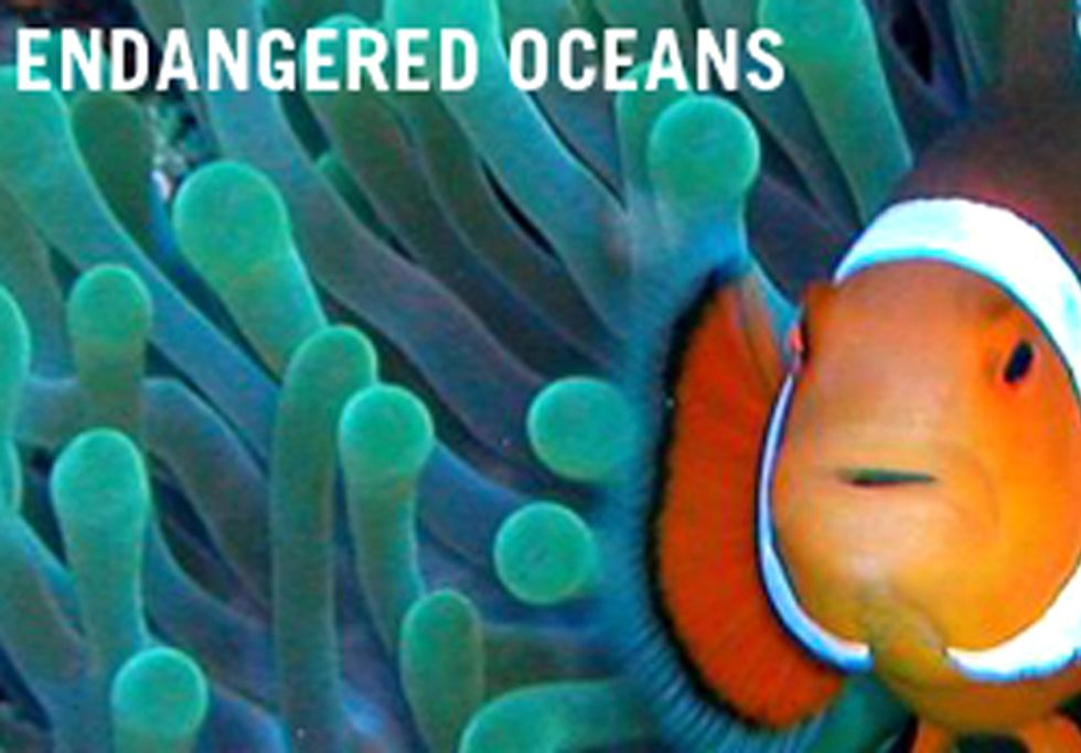 Campaign Calls for National Plan to Curb Ocean Acidification and Save Sea Life