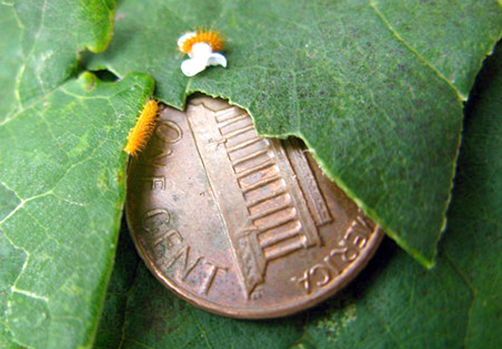 Obama Administration's National Bioeconomy Blueprint Ignores Risks