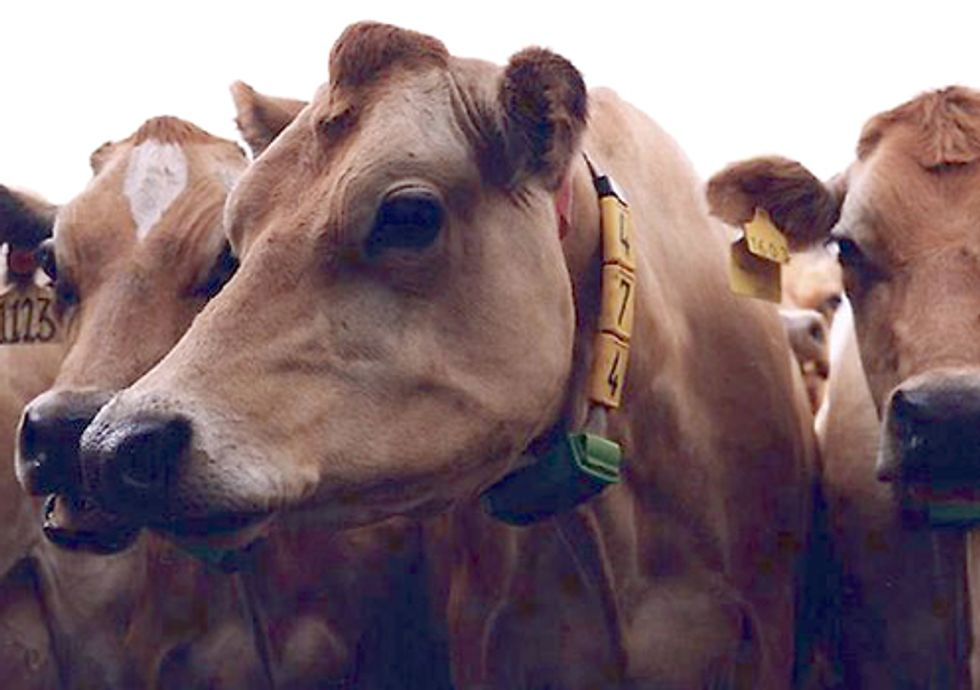 Five Reasons a 'Global Cattle Drive' to China Is a Bad Idea
