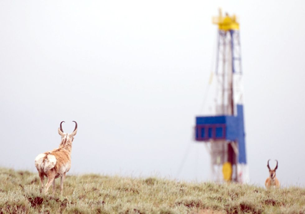 Study: Natural Gas Development Linked to Wildlife Habitat Loss