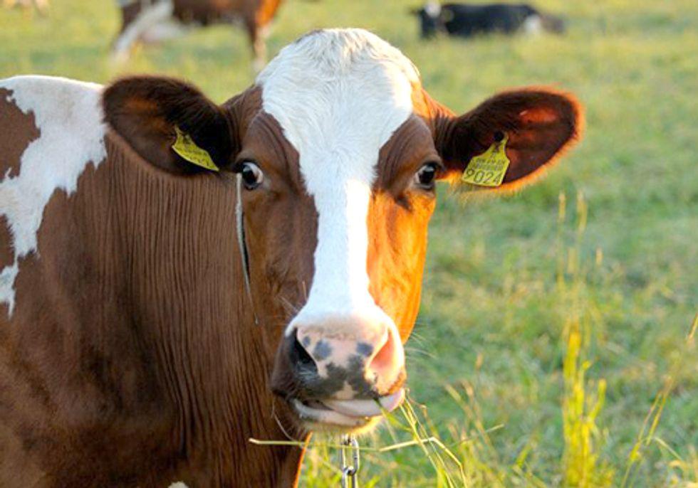 USDA Quarantines Second California Farm in Mad Cow Disease Investigation