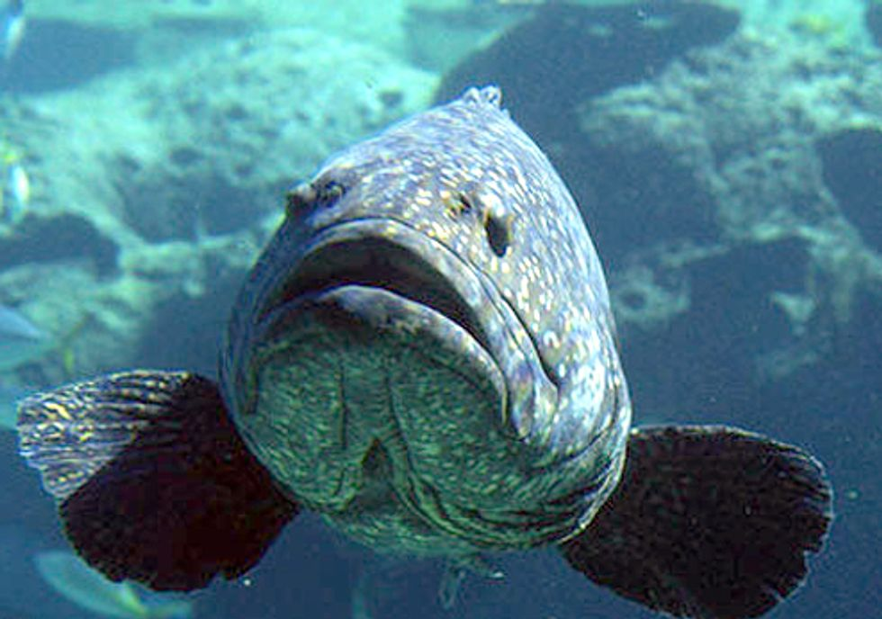 Critically Depleted Fish Lose Protection