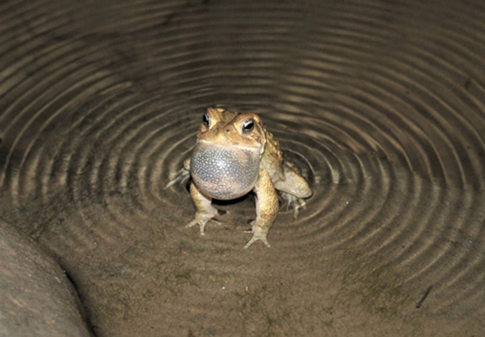 Delaware Riverkeeper Urges Action to Protect Emerging Amphibians from Pipeline Debacle