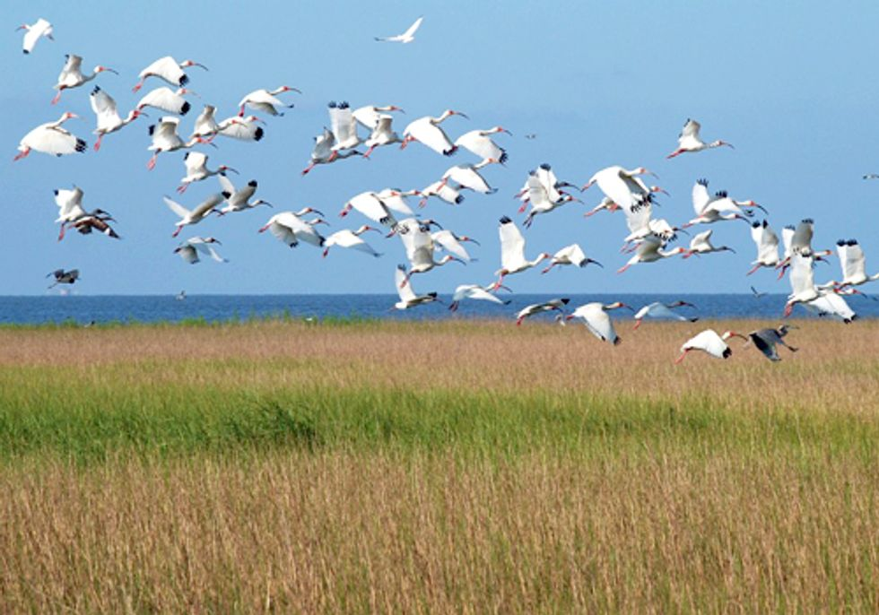 Louisiana Legislature Approves State's 2012 Coastal Master Plan