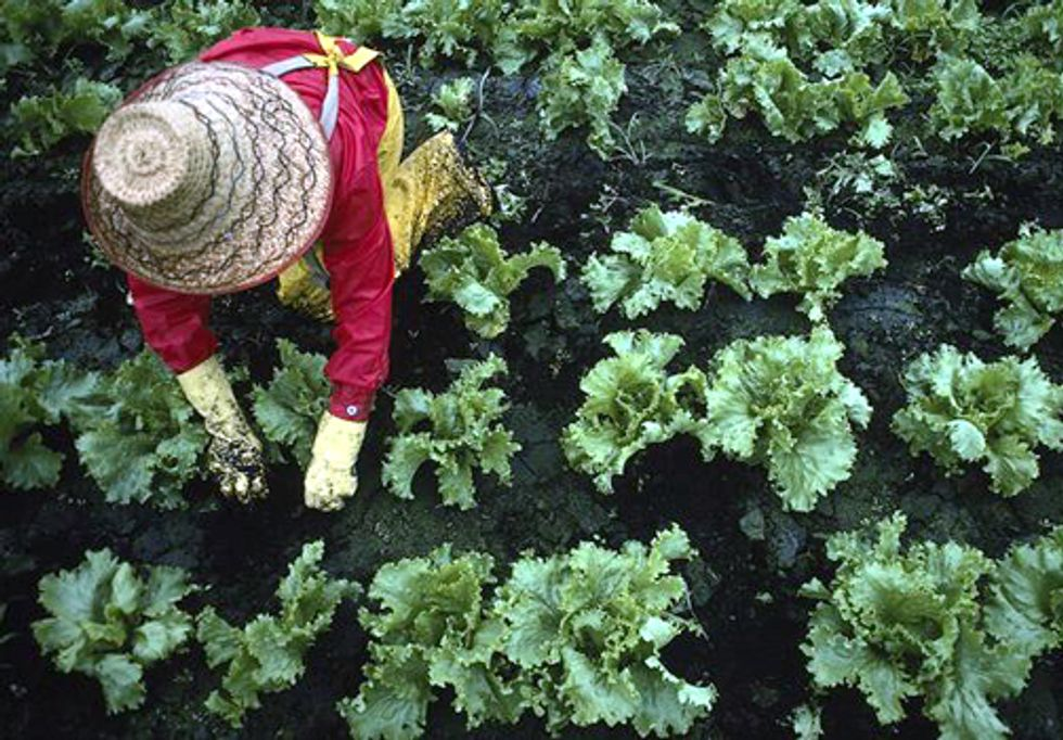 Fixing the Broken Food System Will Improve Human and Environmental Health