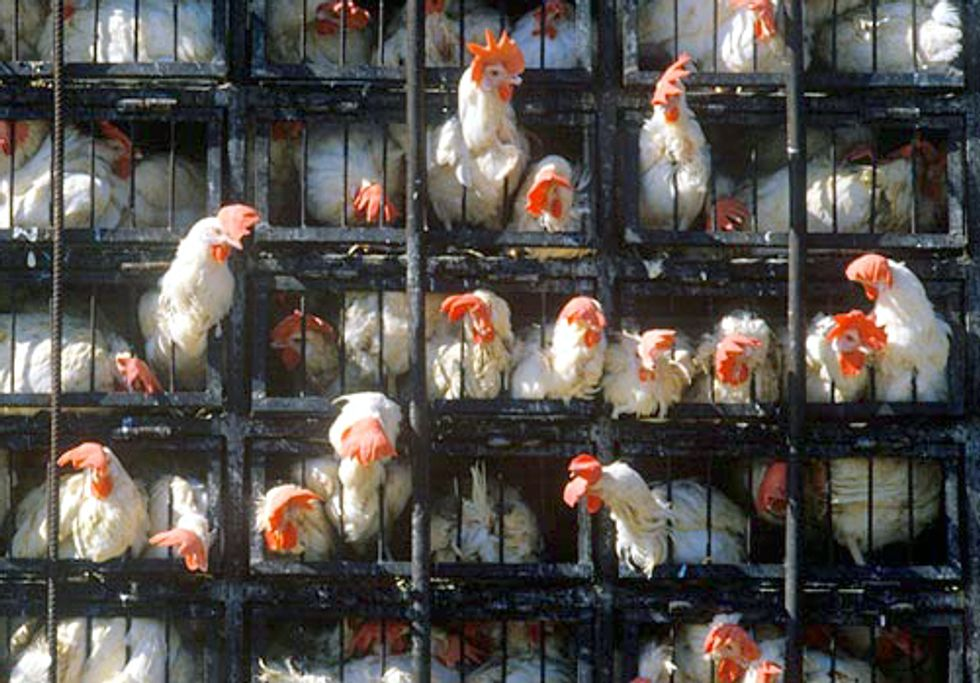 FACTORY FARMING SERIES PART I: Where Have All the Farms Gone?