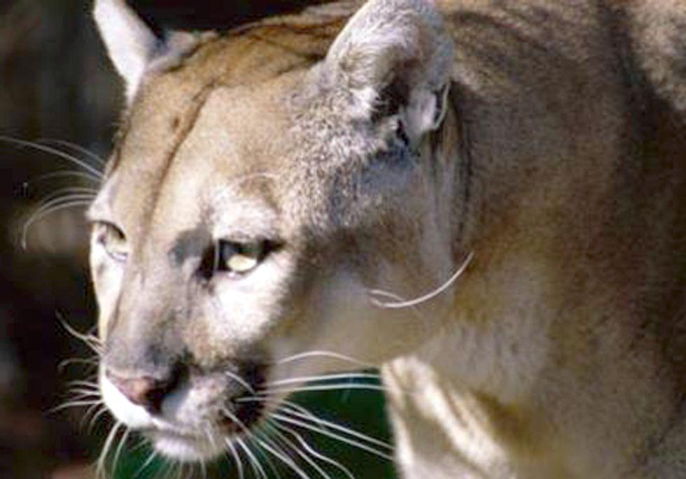 Senator Tries to Dismantle Endangered Species Act