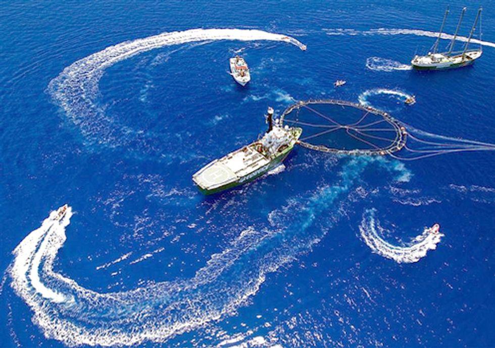 Charting the Decline of Bluefin Tuna