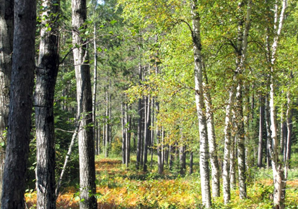 Want Clean Water? Keep Existing Forests Healthy