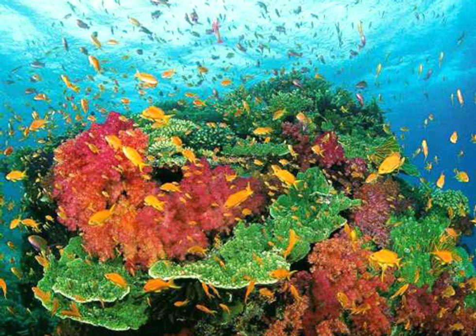 Sea Shepherd to Help Protect Australia's Coral Sea Marine Reserve