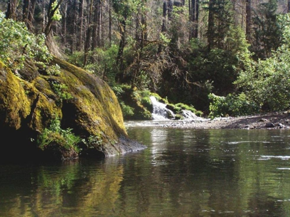 A Victory for Oregon Forests and Wildlife in Federal Court