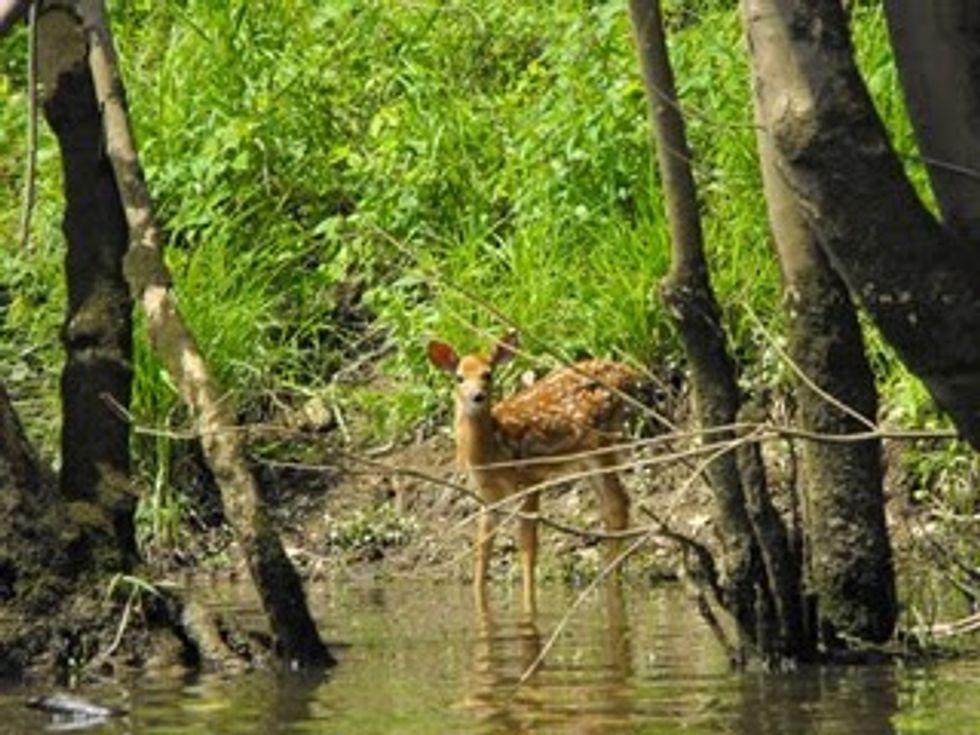WPC Protects Key Property Along Loyalhanna Creek