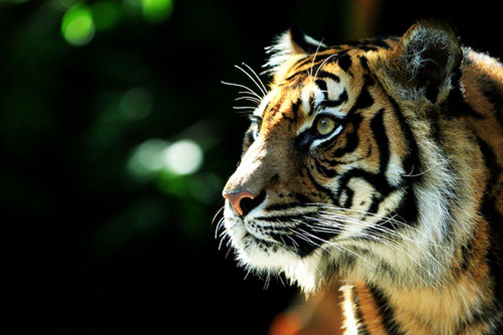 Mattel Drops Packaging Linked to Indonesian Deforestation