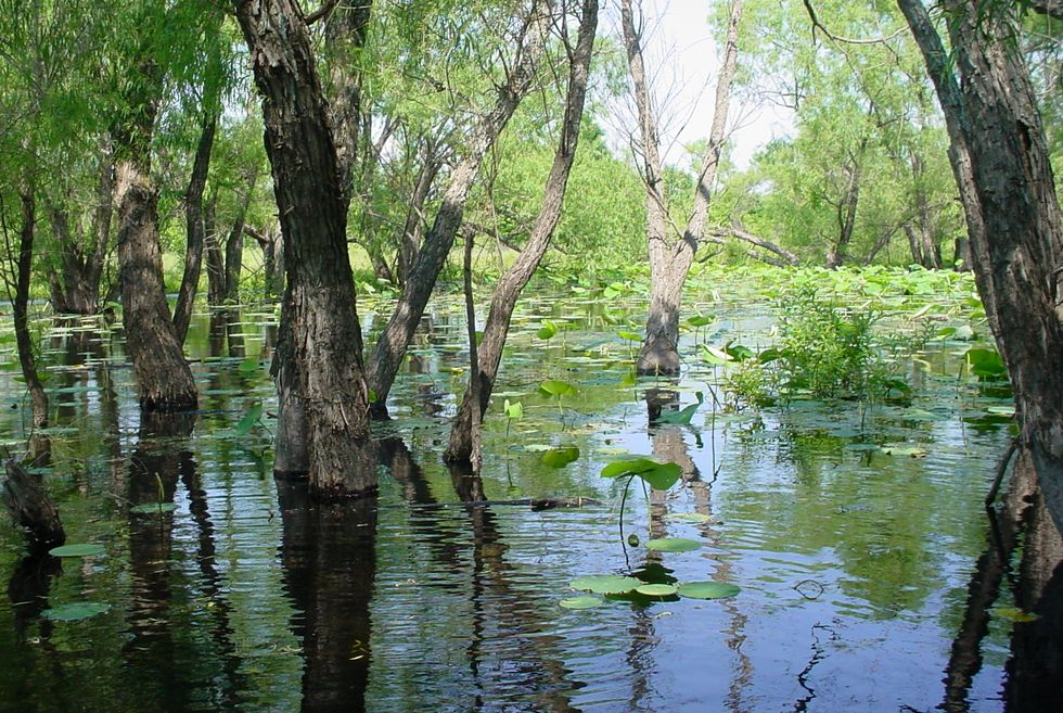 Five-Year Study Affirms Continued Need for Wetlands Conservation