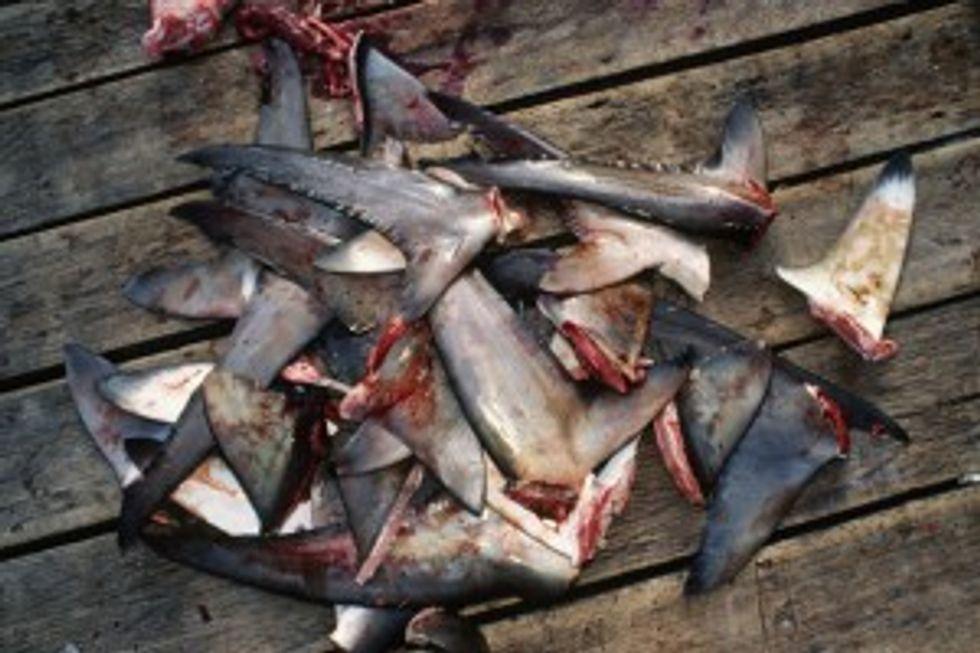 Historic California Legislation Protects Sharks