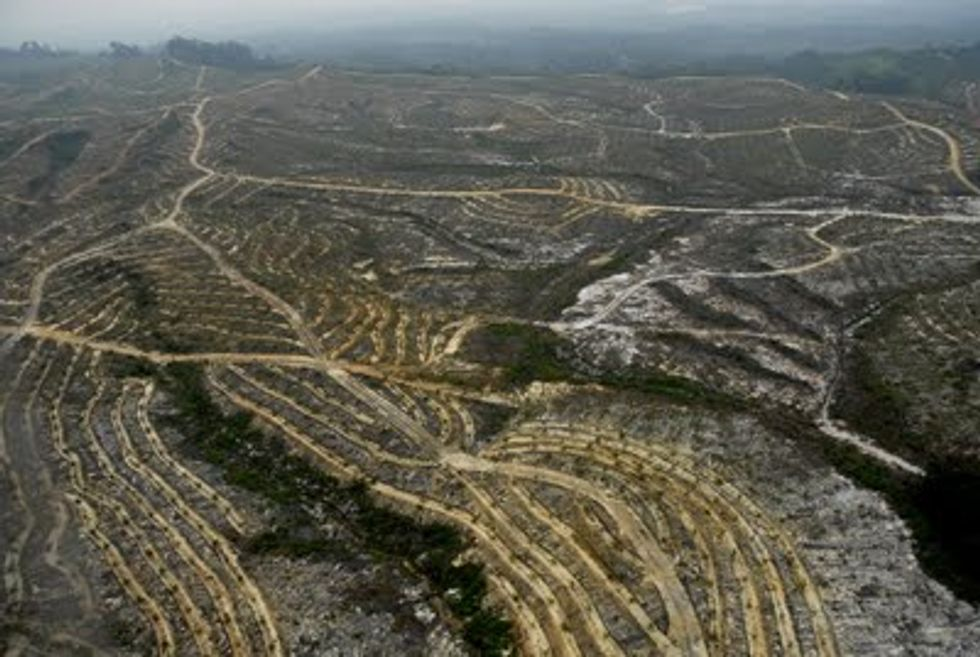 Are You Buying Products from Companies that Destroy Rainforest?