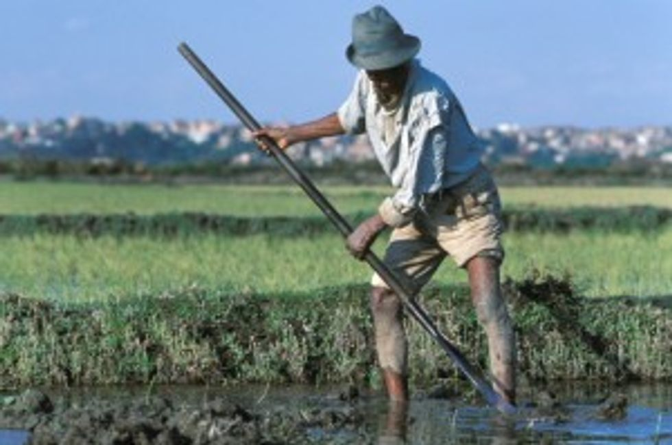 Multi-Pronged Approach Needed to Fight Global Hunger