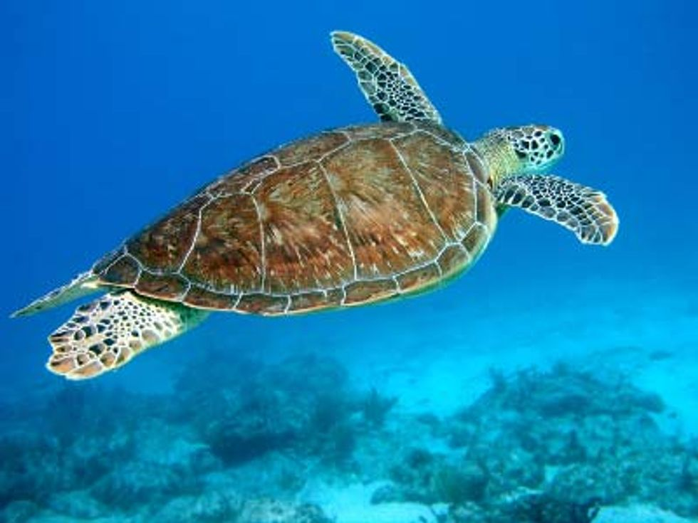 Groups Move to Stop Sea Turtle Deaths
