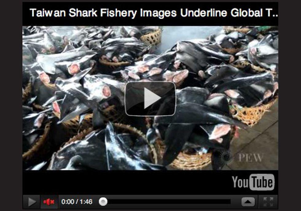 Photos Highlight Global Extent of Shark Fin Trade