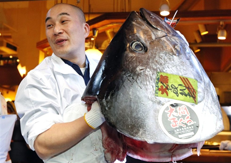 Overfishing Causes Pacific Bluefin Tuna Numbers to Drop 96%