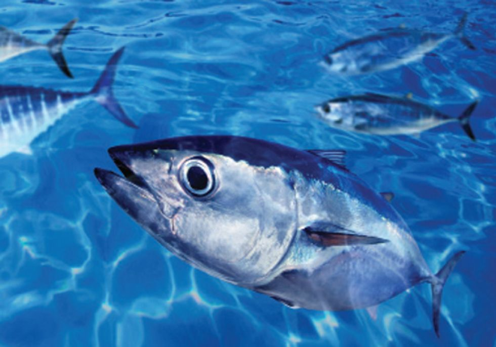 GLOBAL REPORT: Mercury Levels in Humans and Fish Regularly Exceed Health Advisory Levels