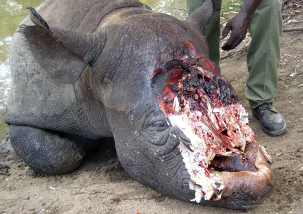 Rhinos in Crisis: Poaching and Illegal Trade Reach Highest Levels in 20 Years